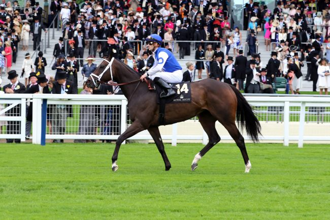14 June2016; TEPIN, Julien Leparoux up, prior to his success in The Queen Anne Stakes at Ascot. © Peter Mooney, 6, Cumberland Street, Dun Laoghaire, Co. Dublin, Ireland. Tel: 00 353 (0)86 2589298
