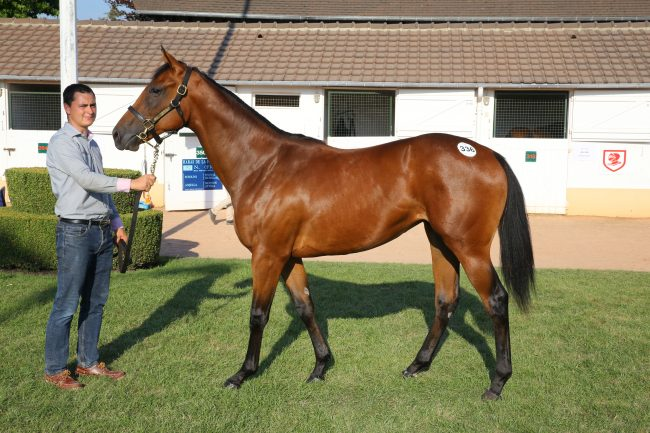 Courtesy & with thanks Arqana photo LOT 336 August Yearling sales Deauville.